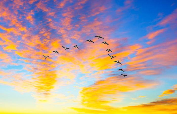 image©Giancarlo-Liguori-stock.adobe.com.jpg